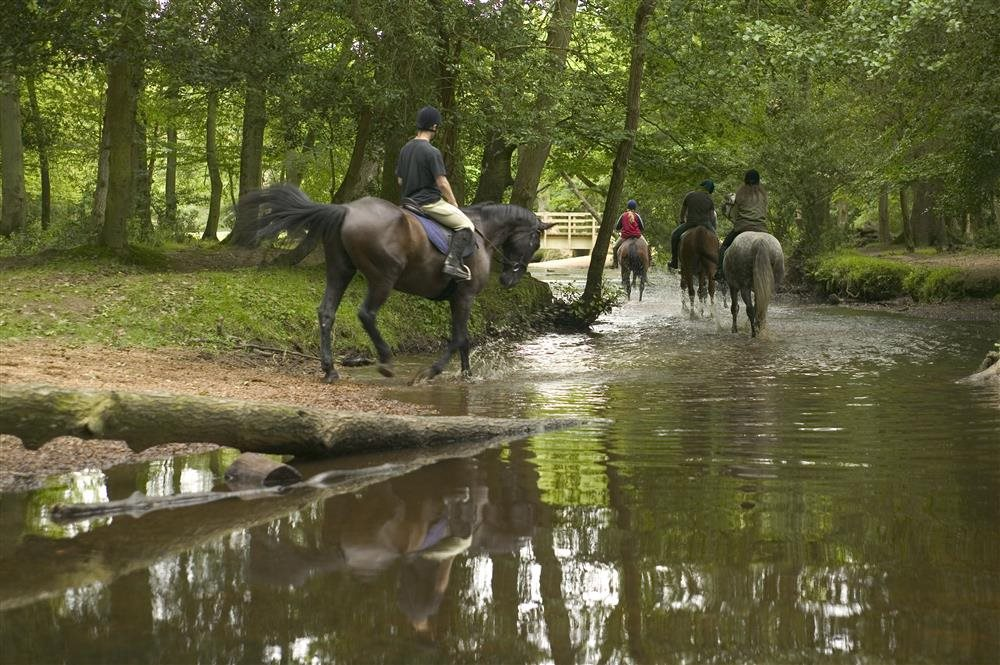 New-Forest-National-Park-Hampshire